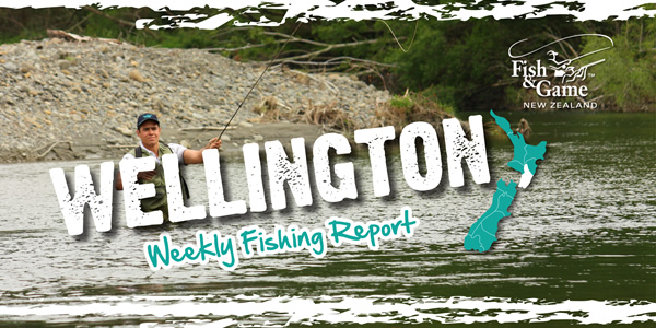 Wellington Weekly Fishing Report